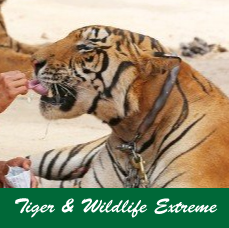 Tiger-&-Wildlife-Extream.jpg