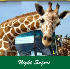nightsafari